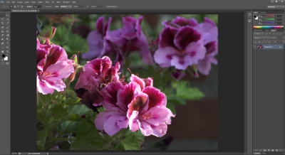 Beginnercursus Adobe Photoshop